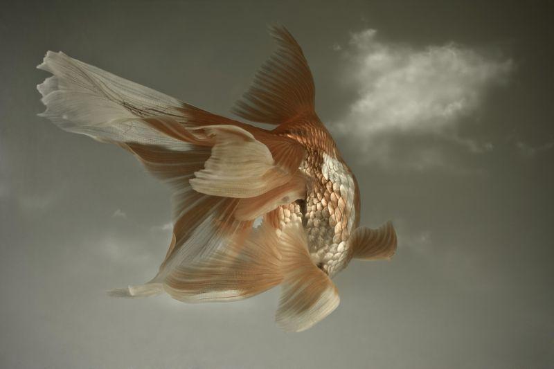 Rencontres poissons garçon